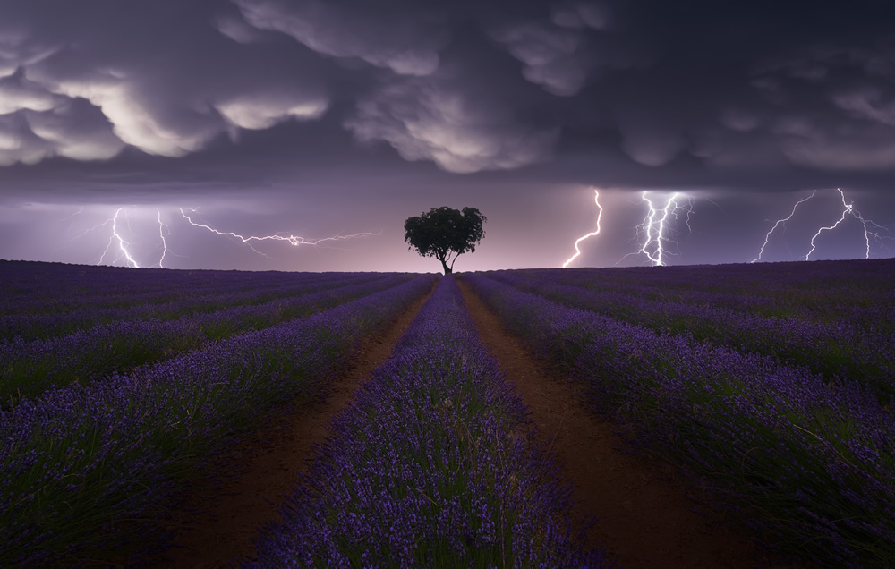 sony_world_photography_awards_open_competition_category_winners_03.jpg