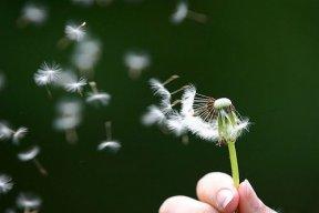 Wind my love