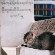 Thai-Meo